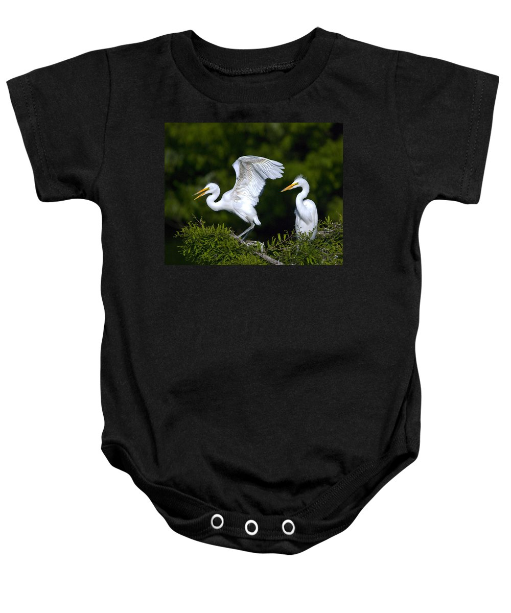 Egrets Baby Onesie featuring the photograph Young Egret Spreading His Wings by John Greco