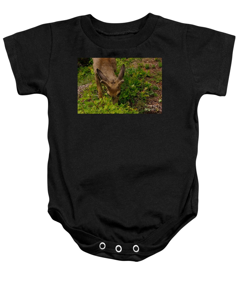 Deer Baby Onesie featuring the photograph A Young Buck Grazing by Jeff Swan