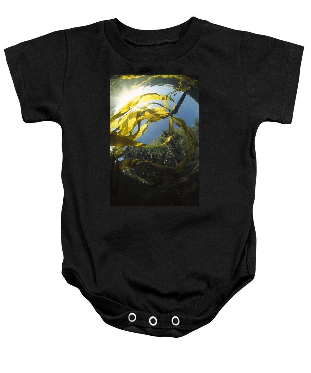 00117550 Baby Onesie featuring the photograph Bull Kelp Underwater Clayoquot Sound by Flip Nicklin