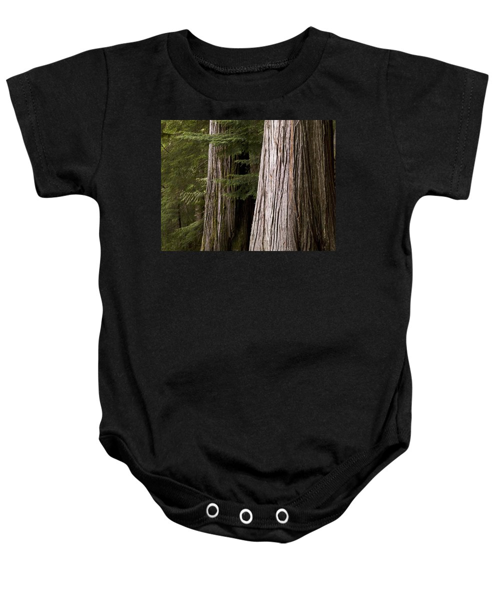 Canada Baby Onesie featuring the photograph Cedar Trees, Whistler, British Columbia by Keith Levit