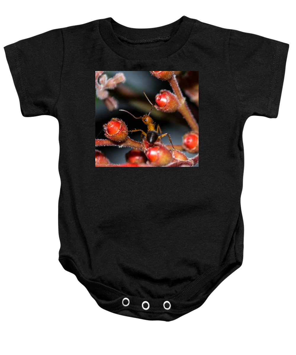 Ant Baby Onesie featuring the photograph Curious Ant by Shannon Harrington