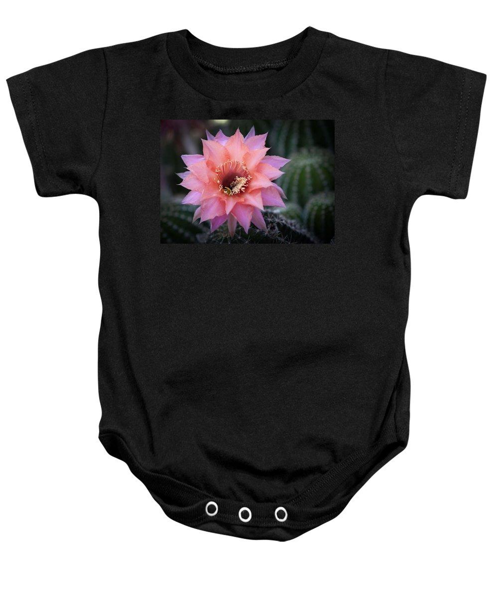 Arizona Baby Onesie featuring the photograph Pink Echinopsis by Saija Lehtonen