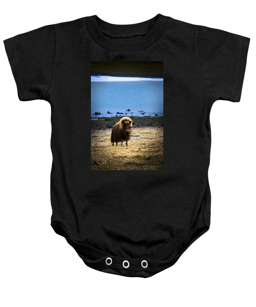 Animals Baby Onesie featuring the photograph Muskox Ovibos Moschatusin The Northwest by Darren Greenwood