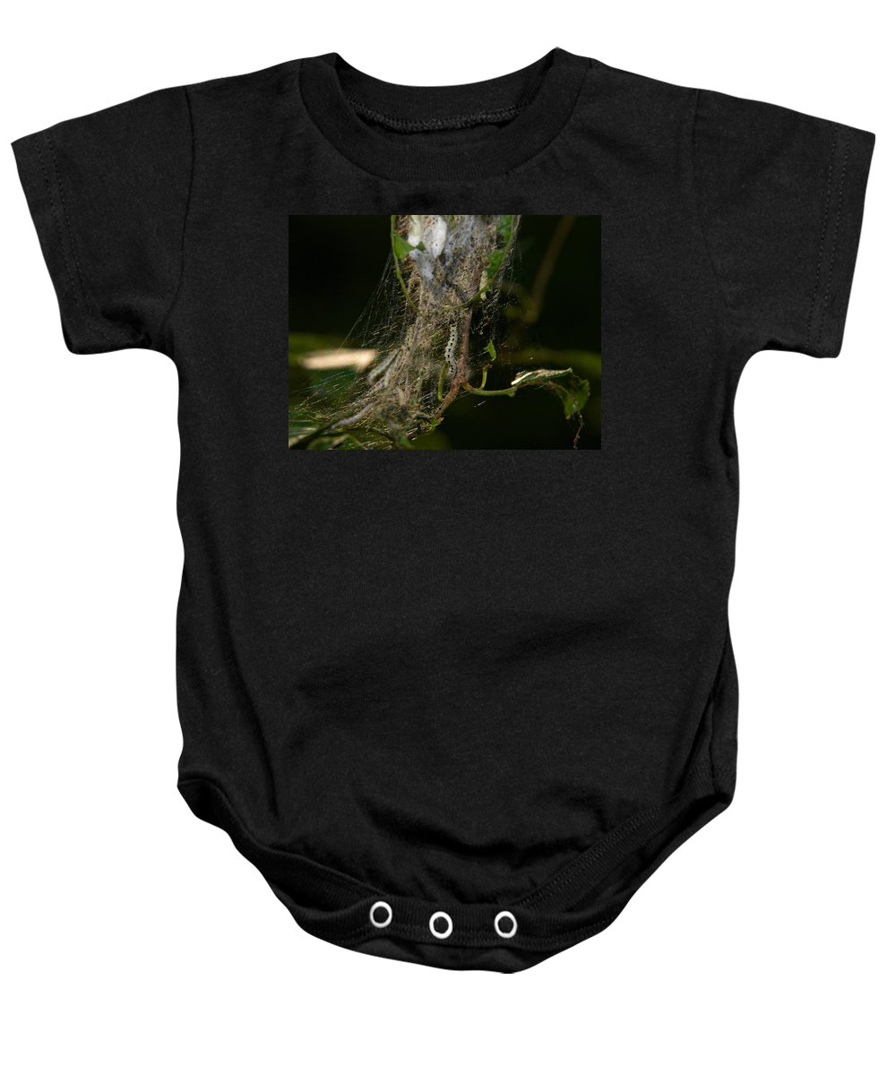 Jouko Lehto Baby Onesie featuring the photograph Bird-cherry Ermine Caterpillars by Jouko Lehto