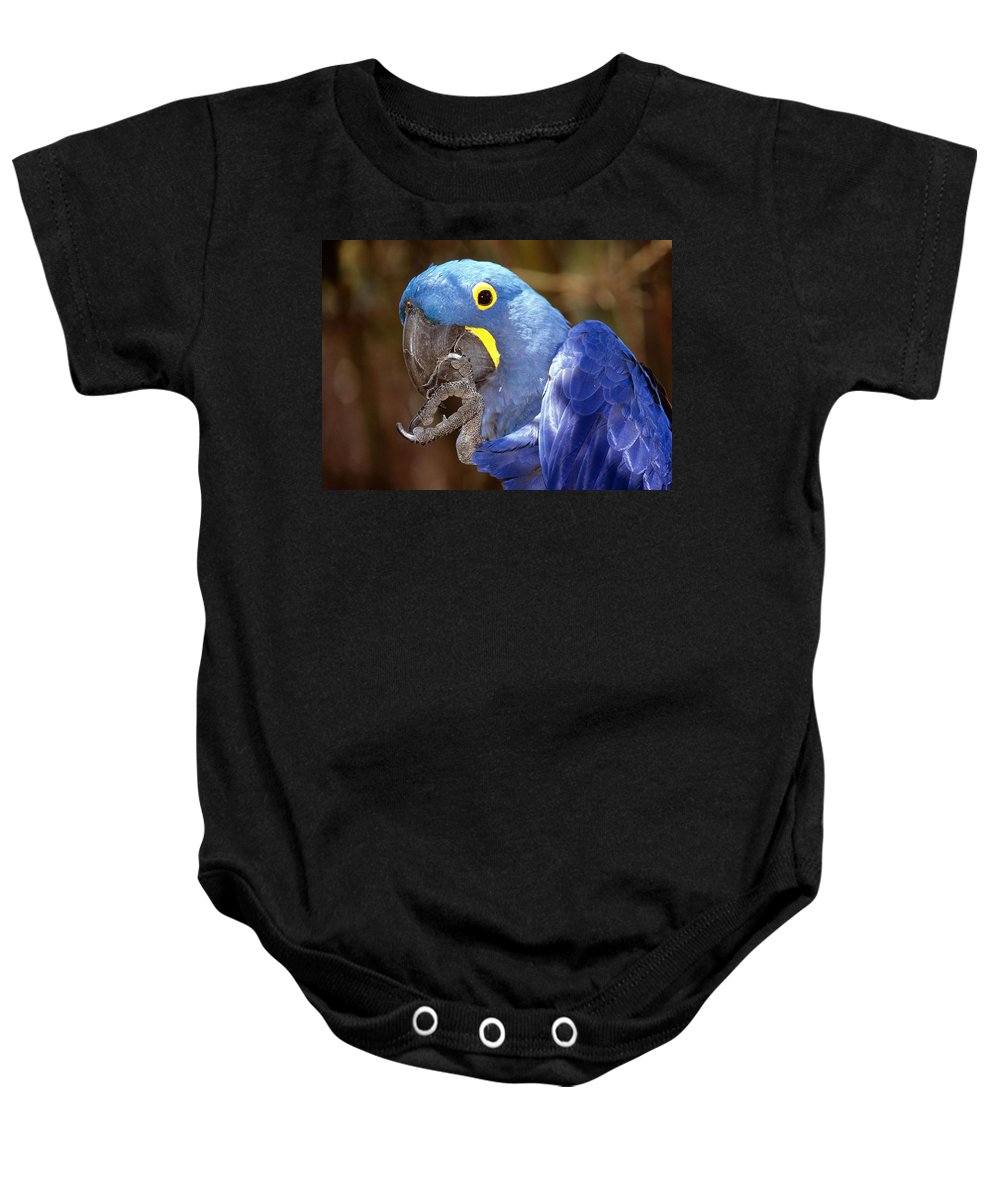 Hyacinth Macaw Baby Onesie featuring the photograph A Foot In Its Mouth by Larry Allan