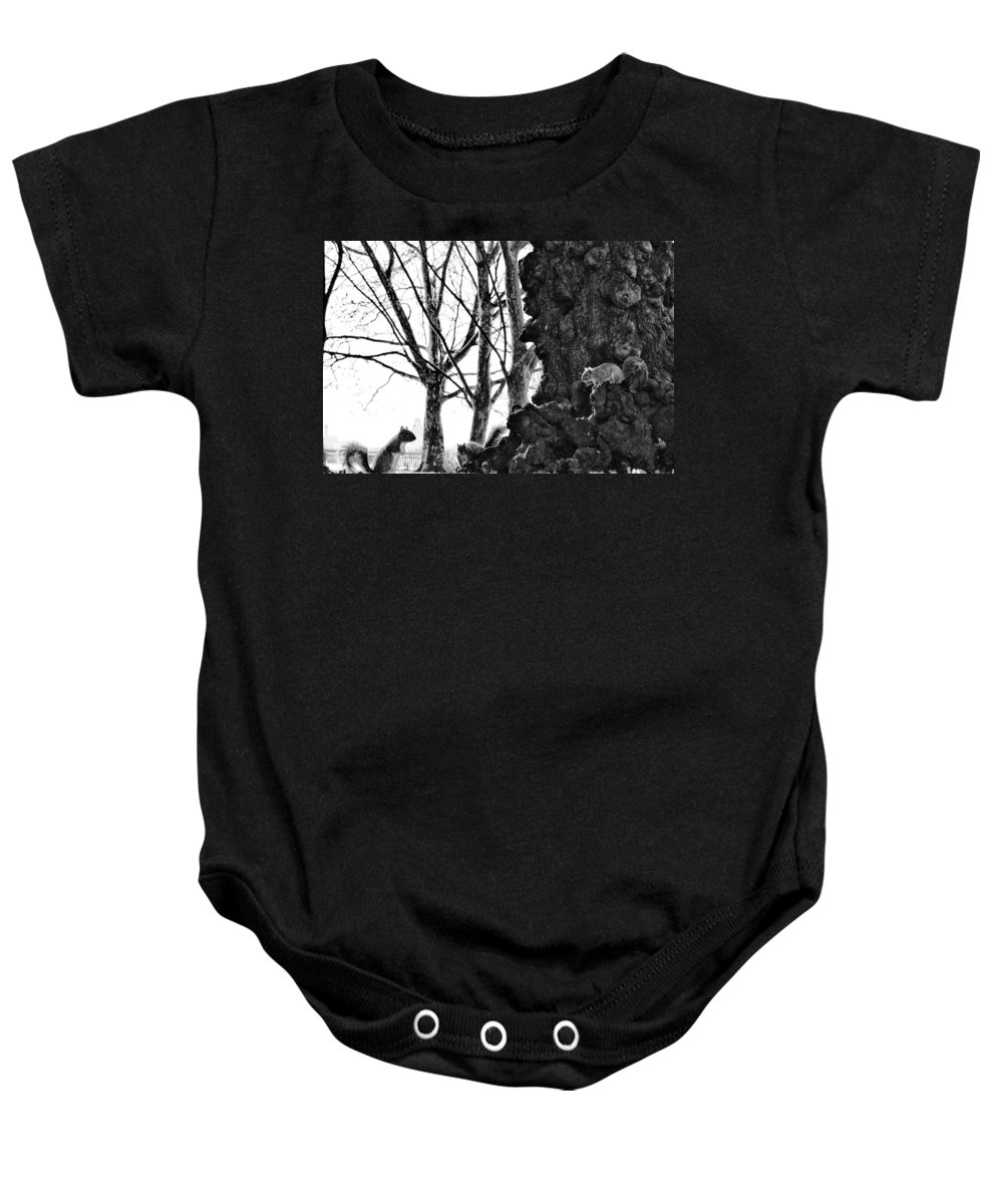 Squirrels Baby Onesie featuring the photograph A Meeting Of Squirrels by Bill Cannon