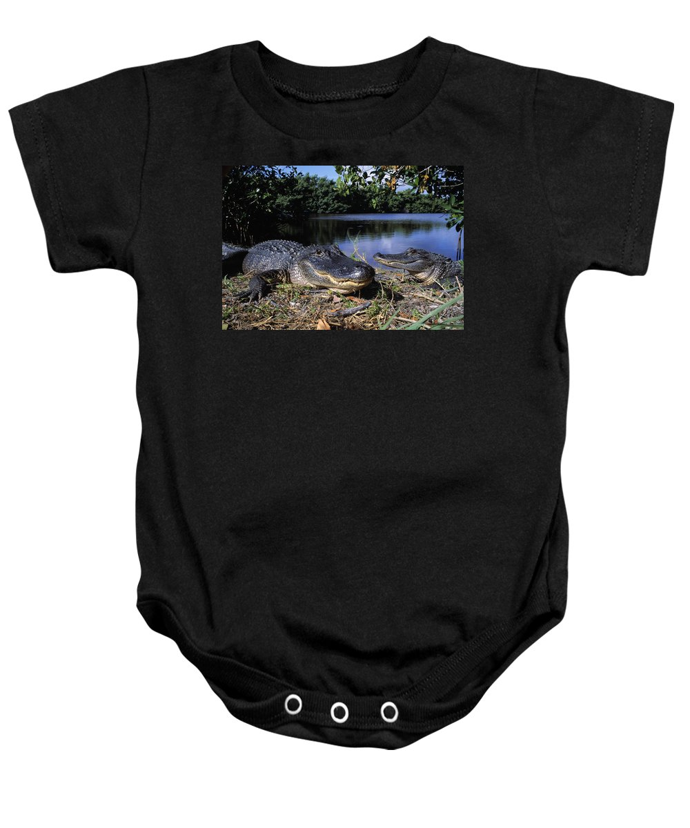 Outdoors Baby Onesie featuring the photograph American Alligators by Natural Selection David Ponton