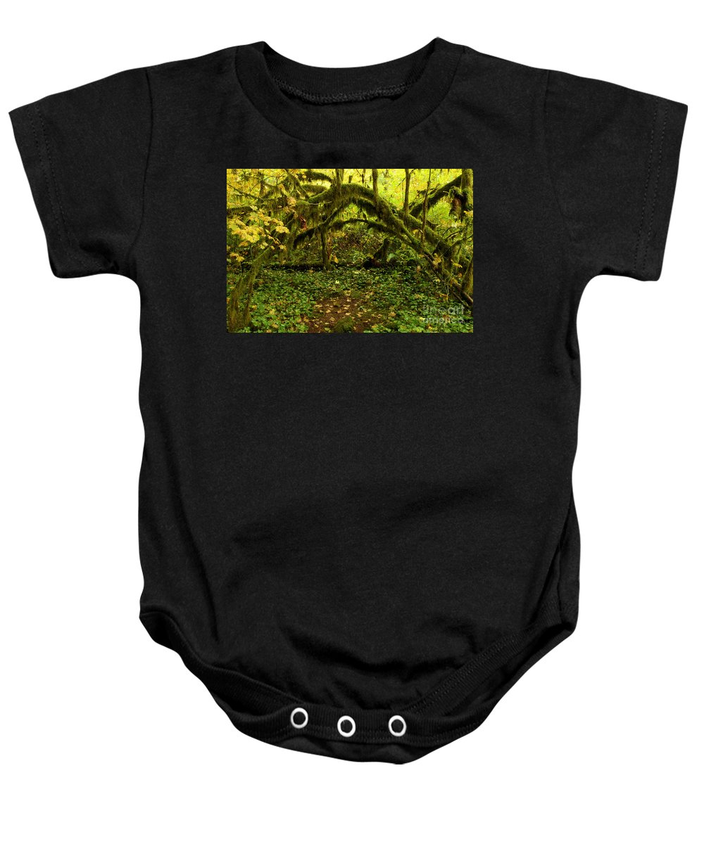 Silver Falls Baby Onesie featuring the photograph Arches In The Rainforest by Adam Jewell