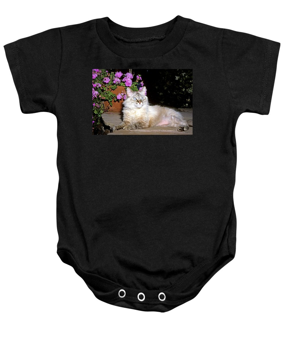 Mixed Breed Cat Baby Onesie featuring the photograph Backyard Beauty by Larry Allan