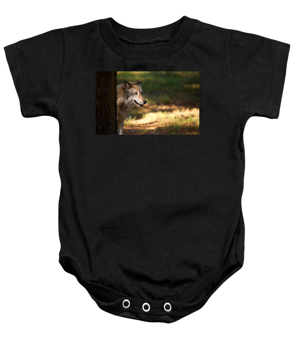 Wolf Baby Onesie featuring the photograph Behind The Tree by Karol Livote