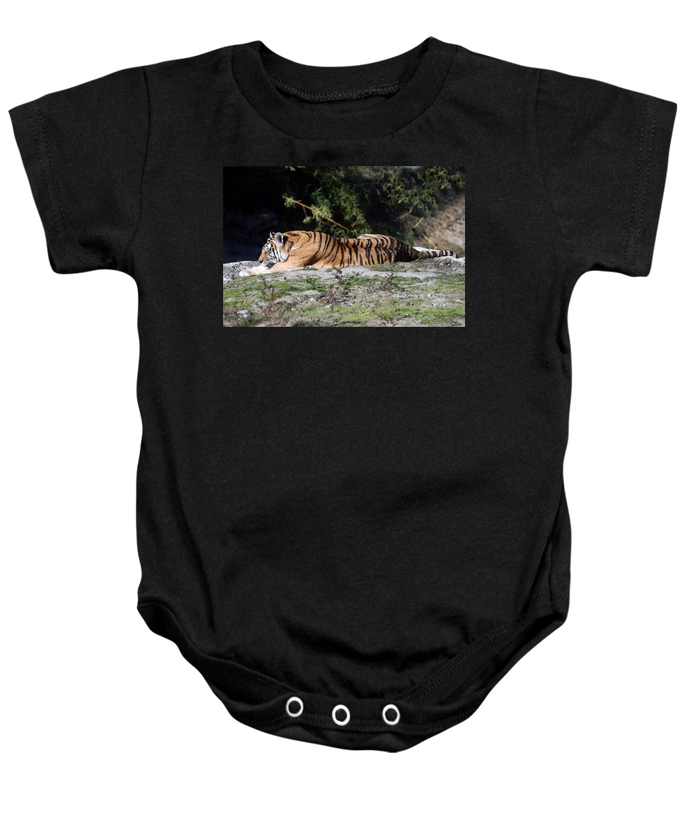 Bengal Tiger Baby Onesie featuring the photograph Bengal Tiger by Cliff Norton