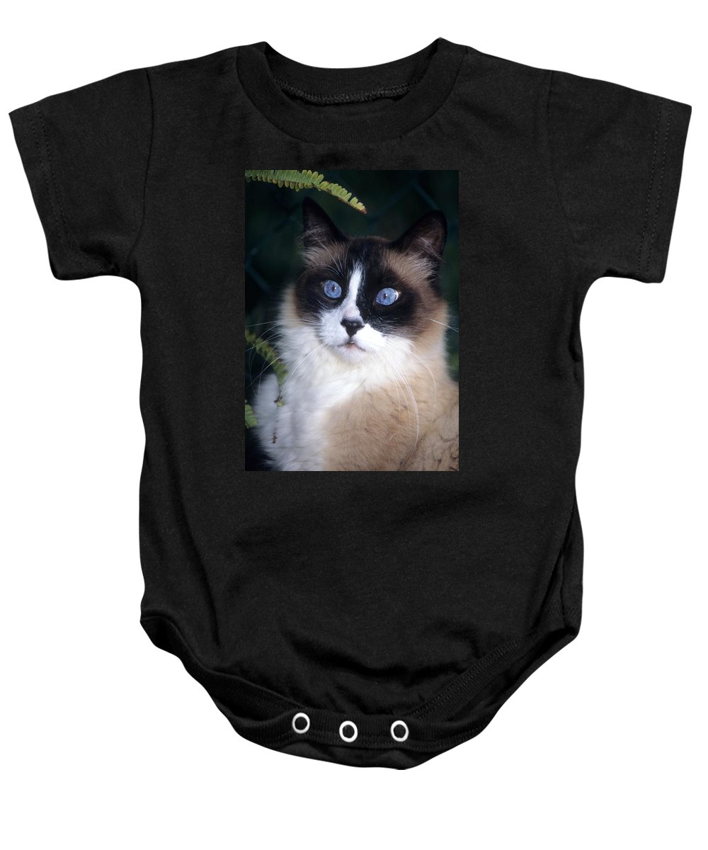 Ragdoll Cat Baby Onesie featuring the photograph Big Blue Eyes by Larry Allan
