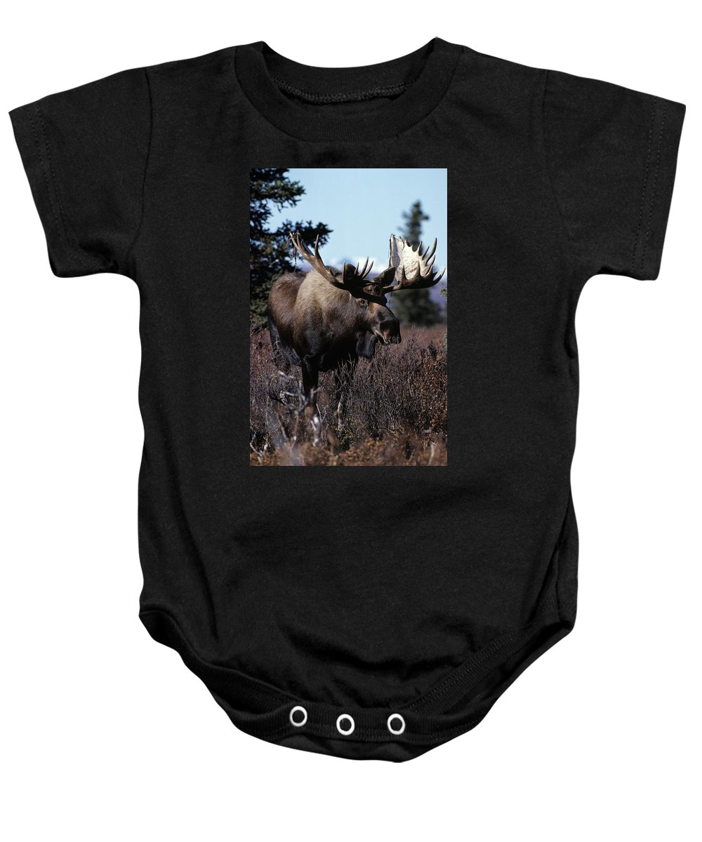 Animal Baby Onesie featuring the photograph Bull Moose by Natural Selection Bill Byrne