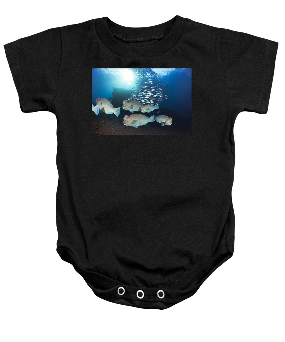 Amazing Baby Onesie featuring the photograph Bumphead Parrotfish by Dave Fleetham - Printscapes