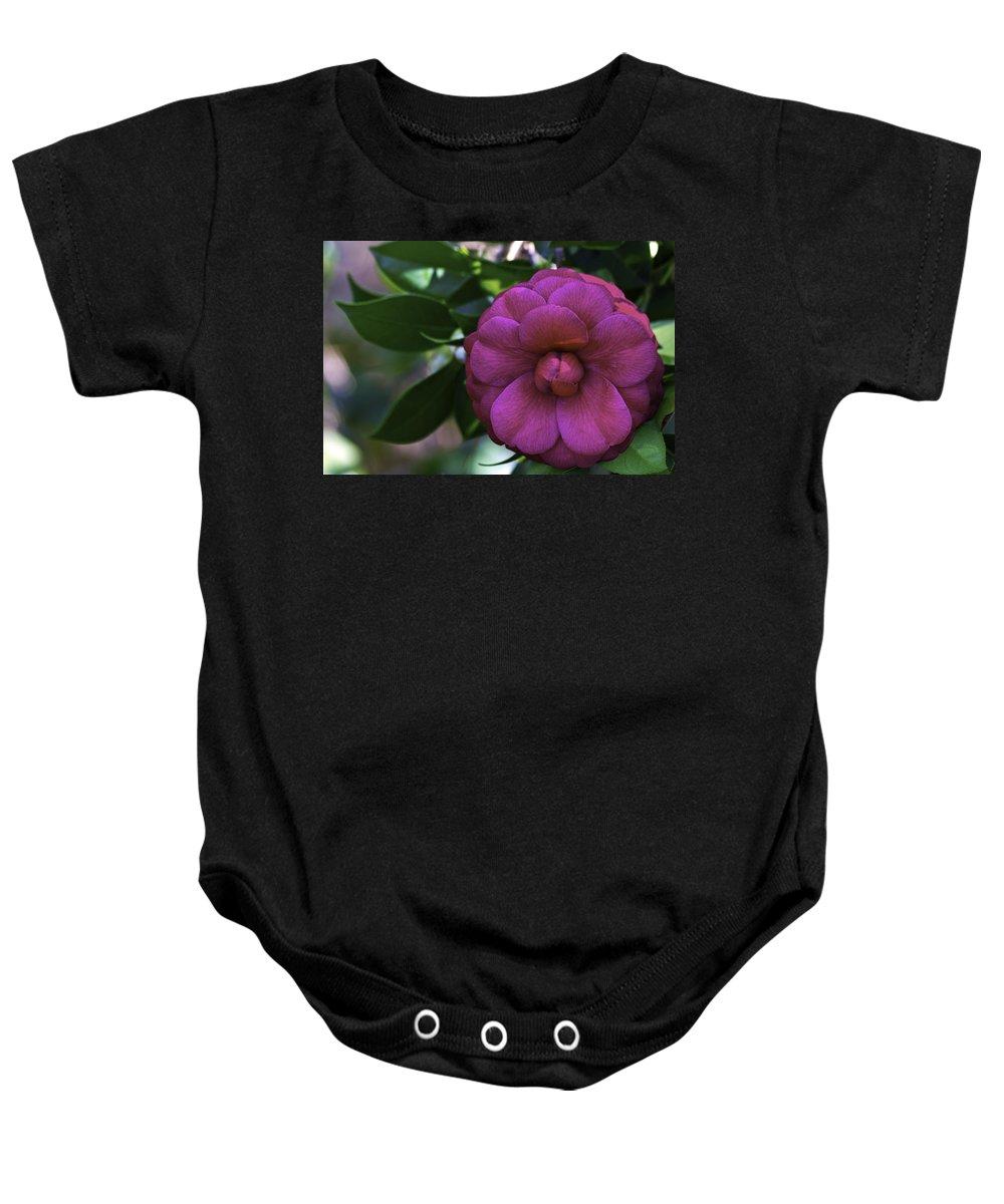 Camellia Baby Onesie featuring the photograph Camellia Twenty by Ken Frischkorn