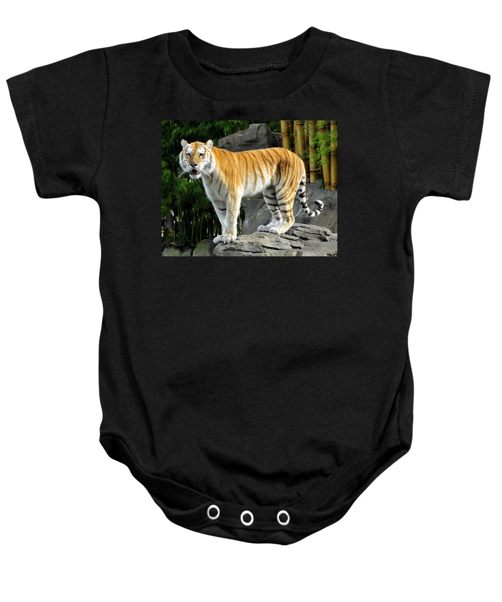Fine Art Photography Baby Onesie featuring the photograph Cat On The Rocks by David Lee Thompson