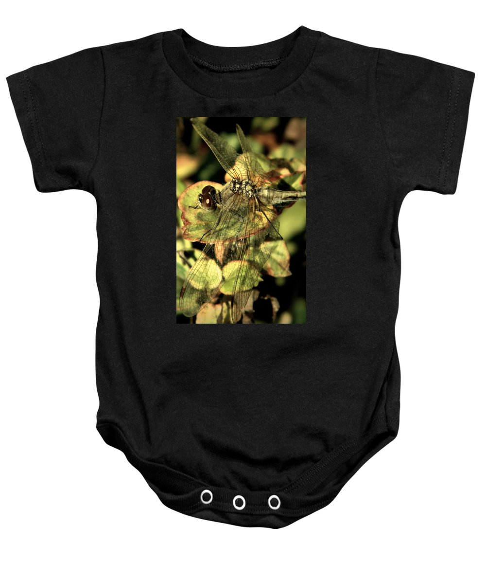 Dragonfly Baby Onesie featuring the photograph Dragonfly Wingspan by Chris Berry
