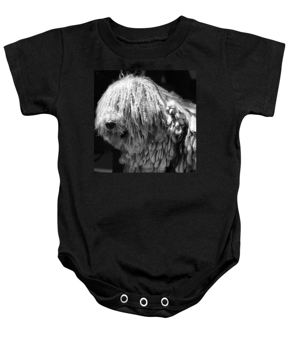 Bergamasco Baby Onesie featuring the photograph Dreadlock Dog by Andrew Fare
