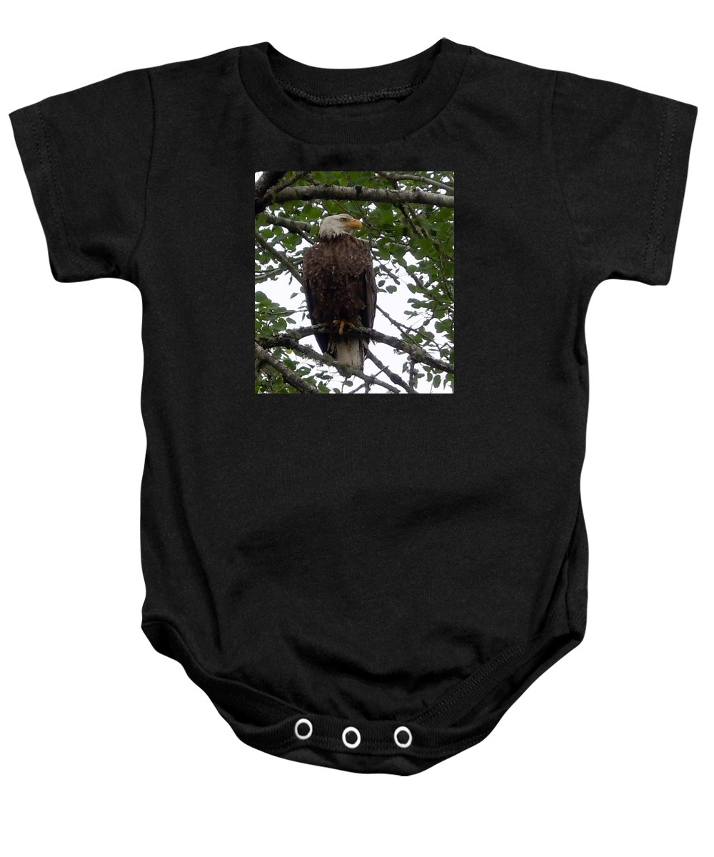 Photography Baby Onesie featuring the photograph Eagle At Hog Bay Maine by Francine Frank