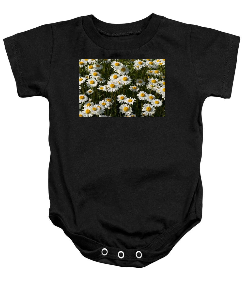 Oxeye Baby Onesie featuring the photograph Field Of Oxeye Daisy Wildflowers by Kathy Clark