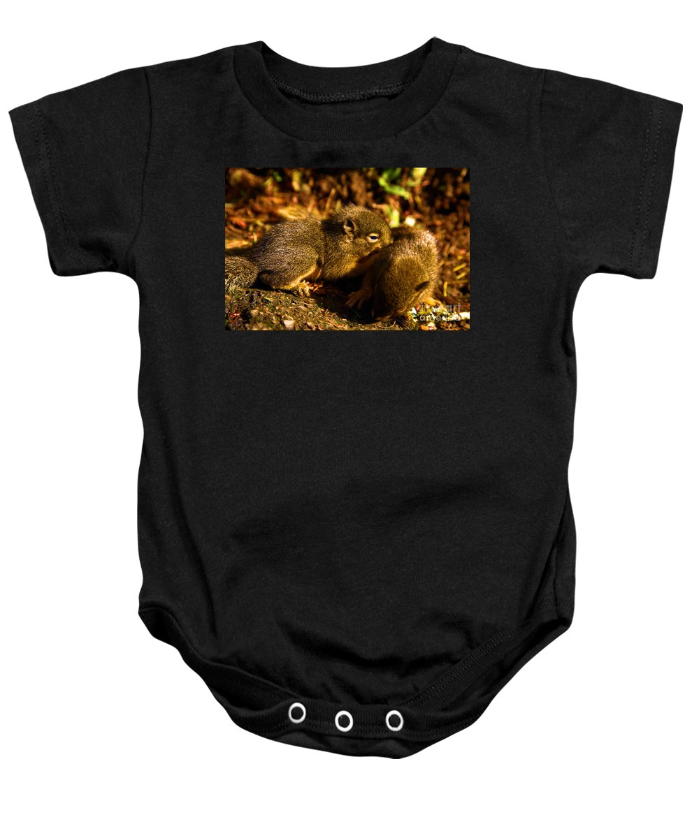 Douglas Squirrels Baby Onesie featuring the photograph Finding Our Way by Adam Jewell