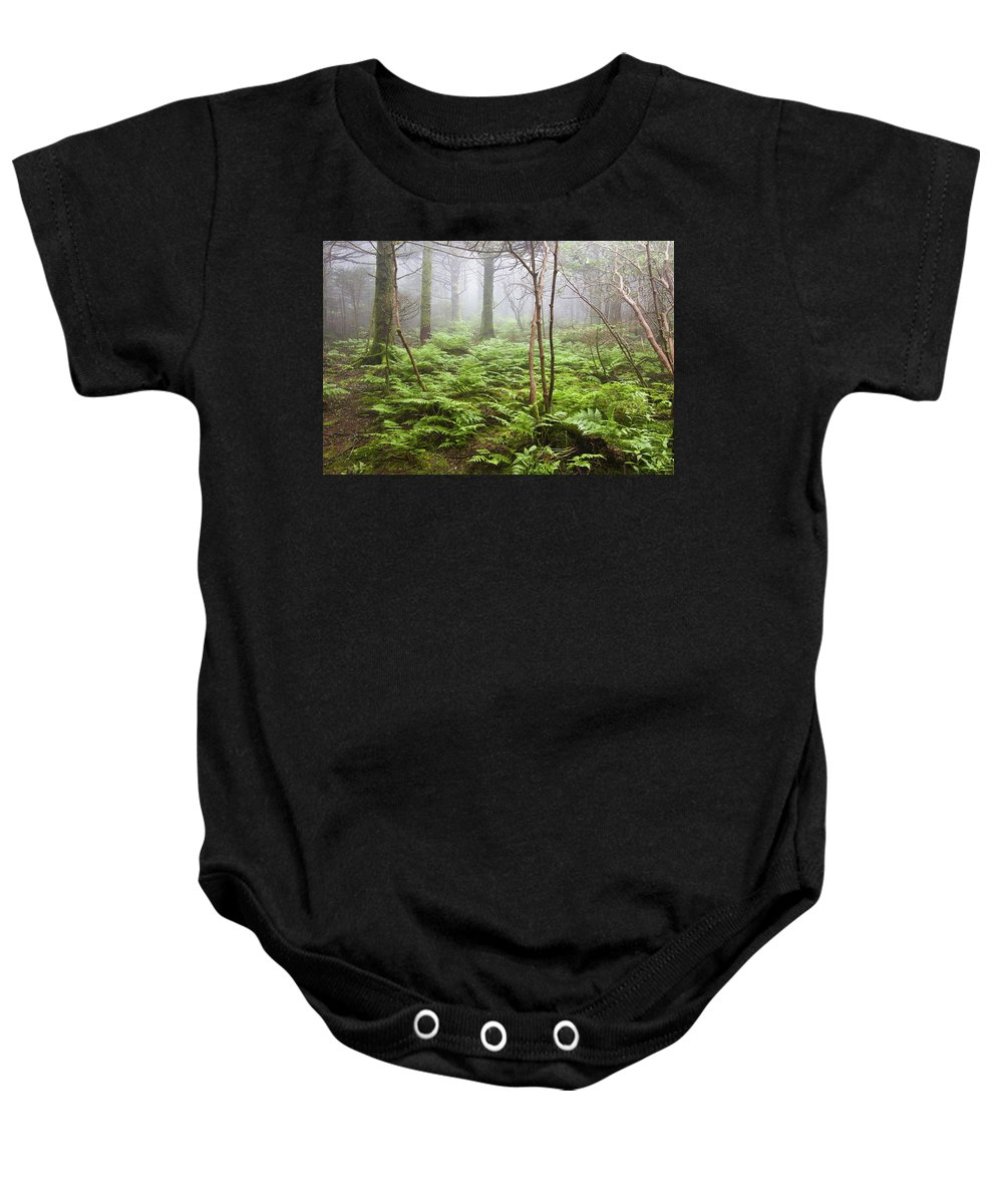 Roan Mountain Baby Onesie featuring the photograph Forest Ferns On A Foggy Morning by Bill Swindaman