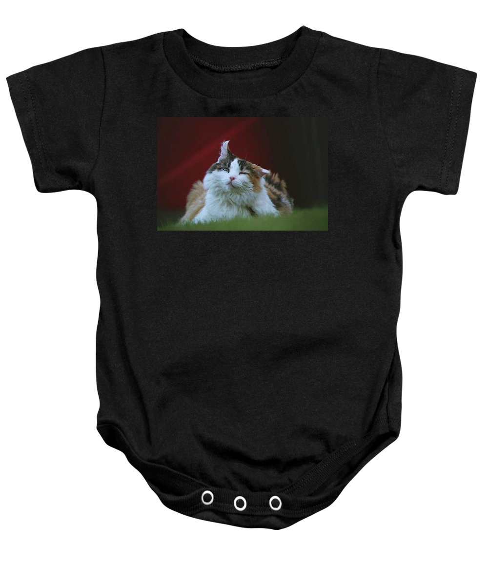 Cat Baby Onesie featuring the photograph Gusty 19980 by Guy Whiteley