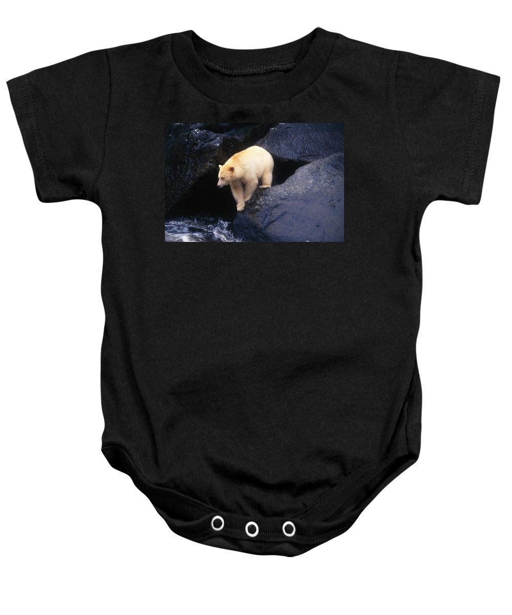 Animal Baby Onesie featuring the photograph Kermode Bear On Boulder Hunting Salmon by Natural Selection David Ponton