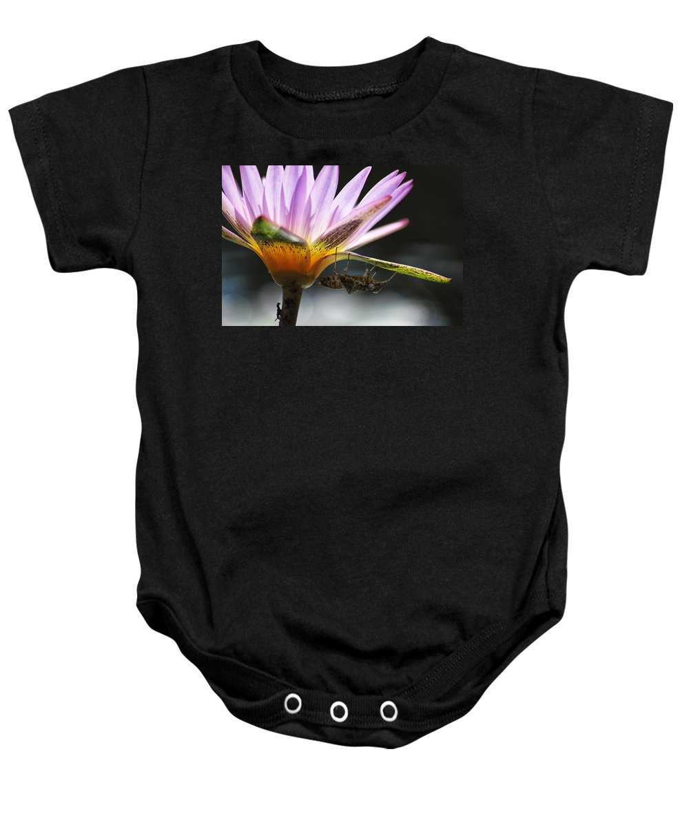 Lilly Baby Onesie featuring the photograph Lilly Visitor by Lauri Novak