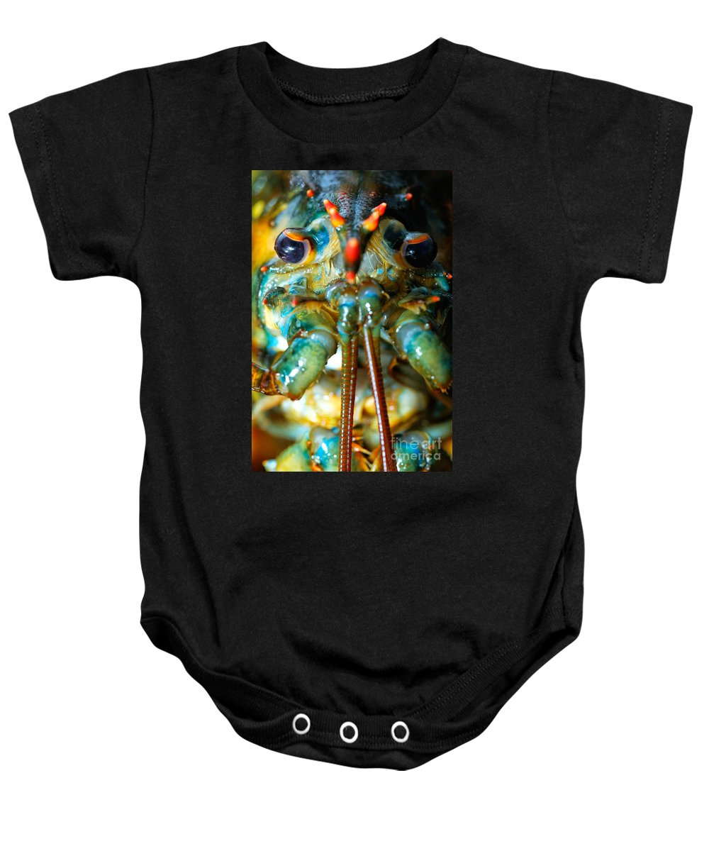 Seafood Baby Onesie featuring the photograph Live New England American Lobsters From Cape Cod by Matt Suess