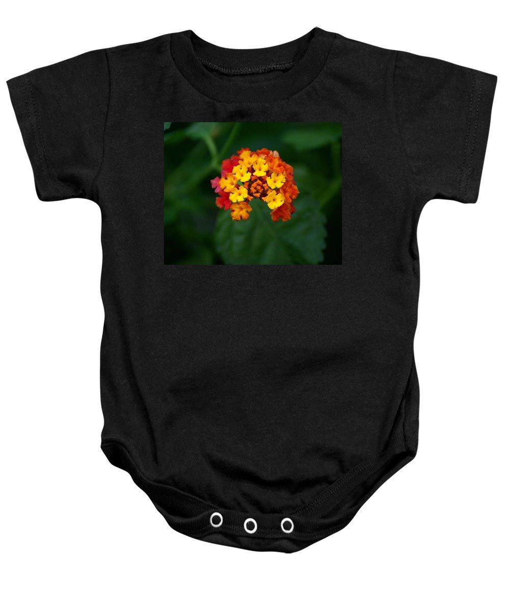 Flowers Baby Onesie featuring the photograph Macro Joy by Ben Upham III