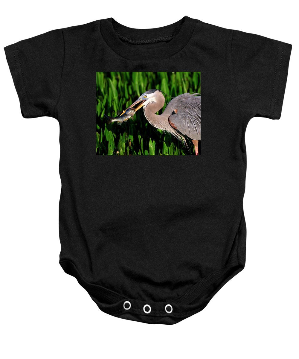 Gret Blue Heron Baby Onesie featuring the photograph Morning Fishing by Bill Dodsworth