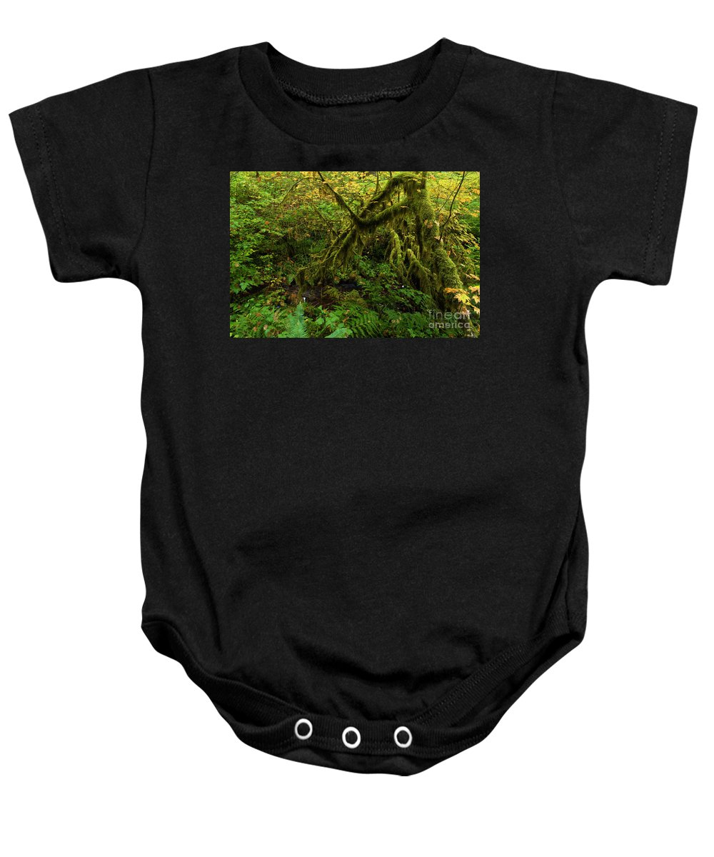 Silver Falls State Park Baby Onesie featuring the photograph Moss In The Rainforest by Adam Jewell