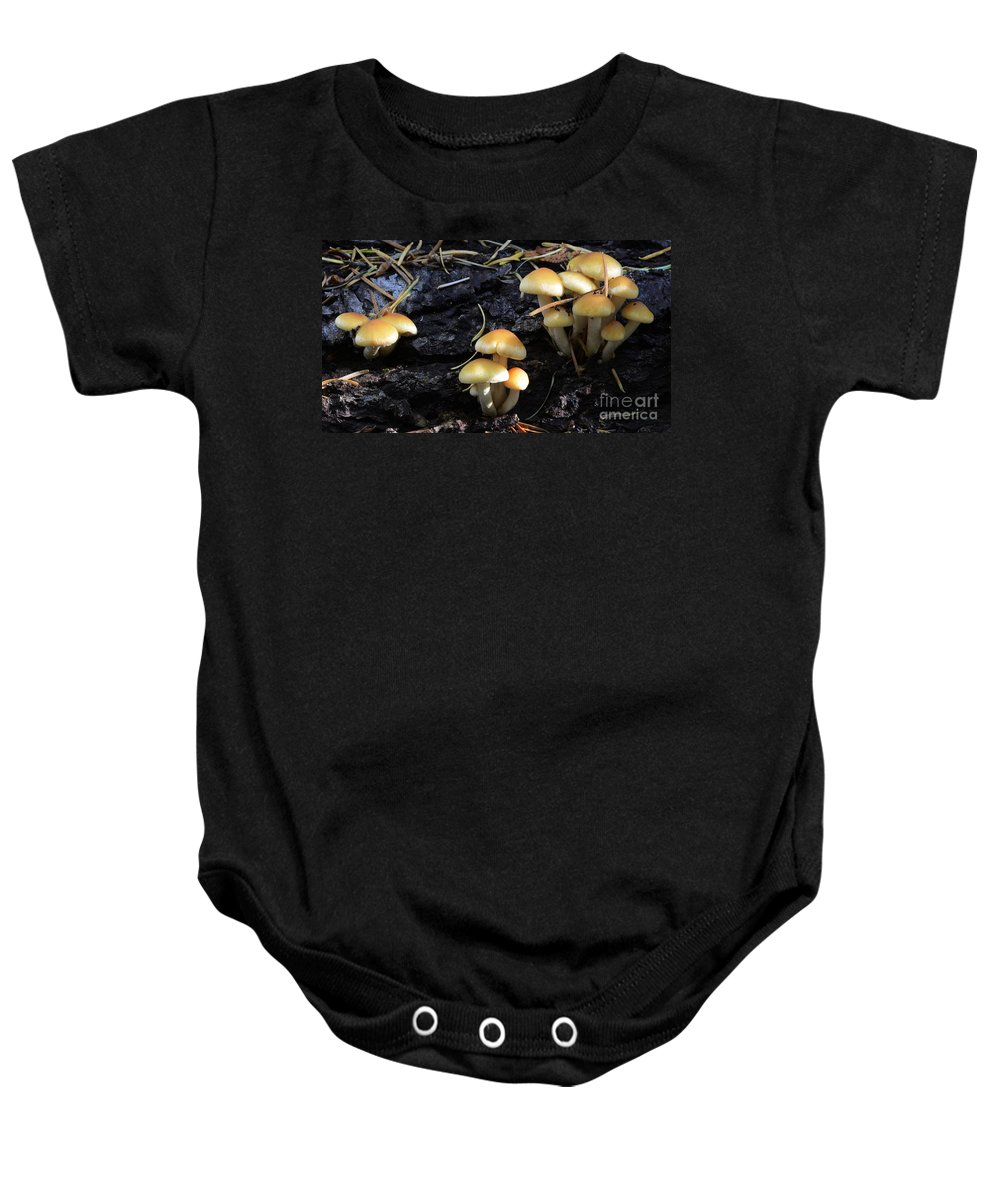 Mushrooms Baby Onesie featuring the photograph Mushrooms 6 by Bob Christopher