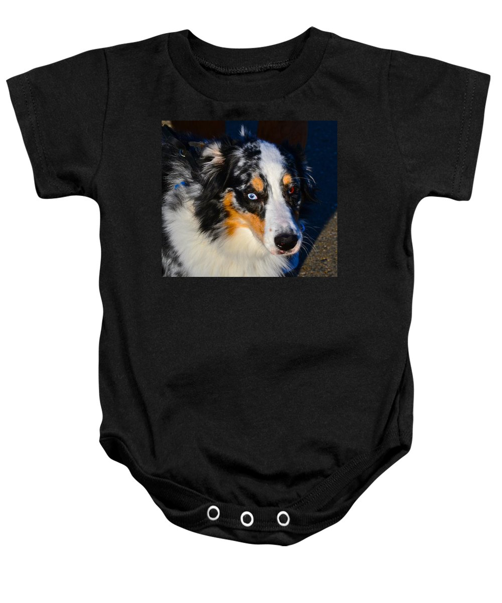 Dog Photographs Baby Onesie featuring the photograph My Brown Eyes Blue 2 by Bill Owen