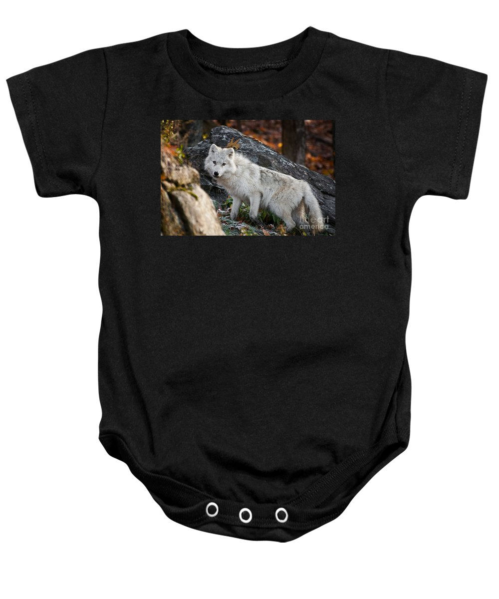 Michael Cummings Baby Onesie featuring the photograph Onthe Rocks by Michael Cummings