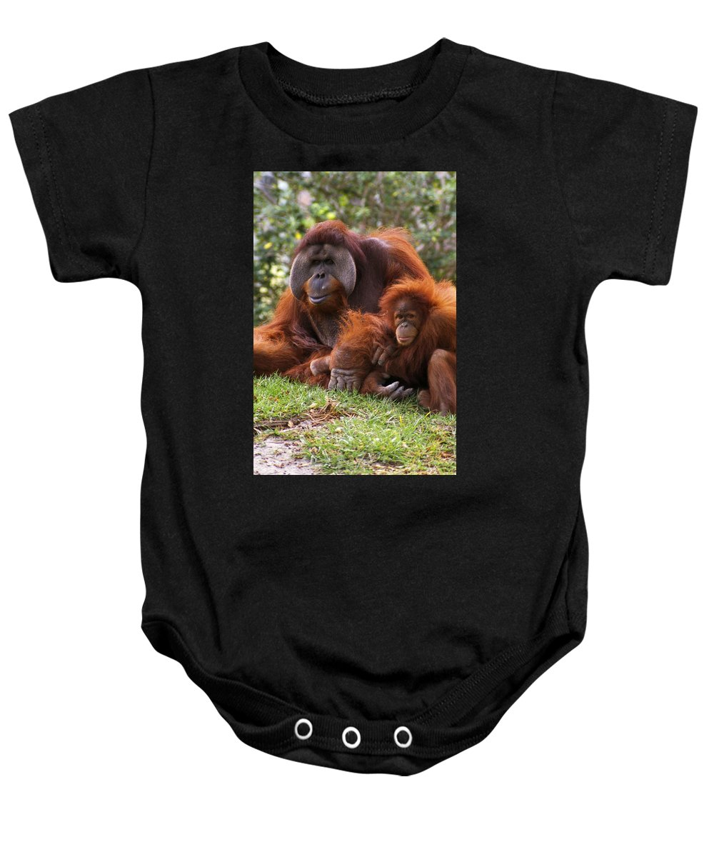 Animal Baby Onesie featuring the photograph Orangutan Mother And Baby by Natural Selection Ralph Curtin