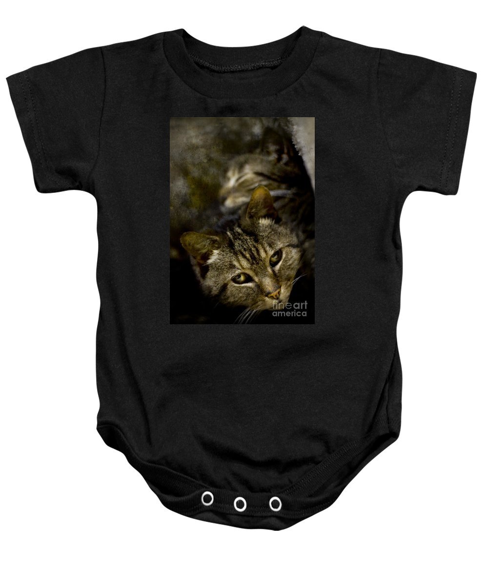 Cat Baby Onesie featuring the photograph Purr by Angel Ciesniarska