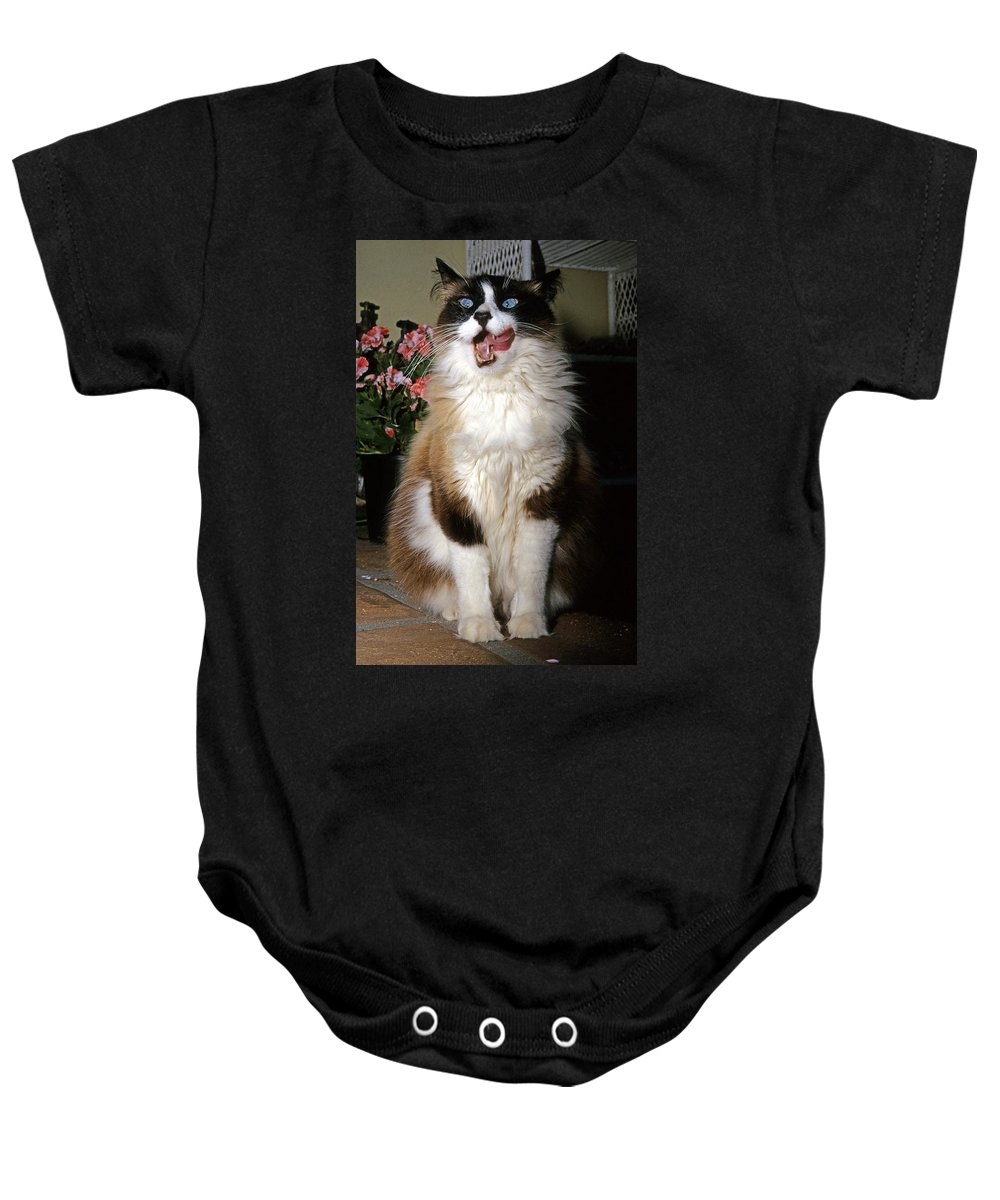 Ragdoll Cat Baby Onesie featuring the photograph Ragdoll Cat Licks His Lips by Larry Allan