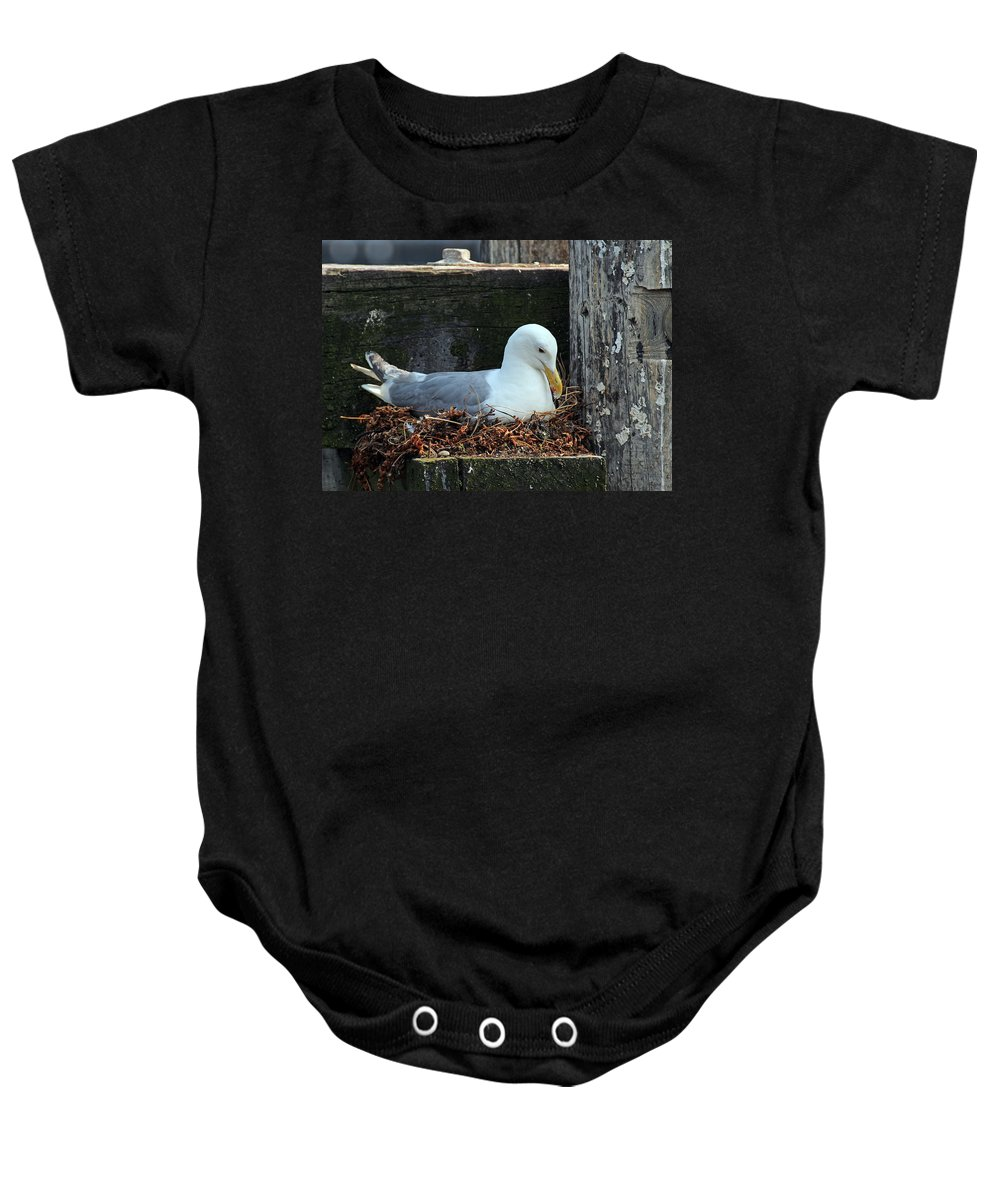 Animal Baby Onesie featuring the photograph Seagull by Paul Fell