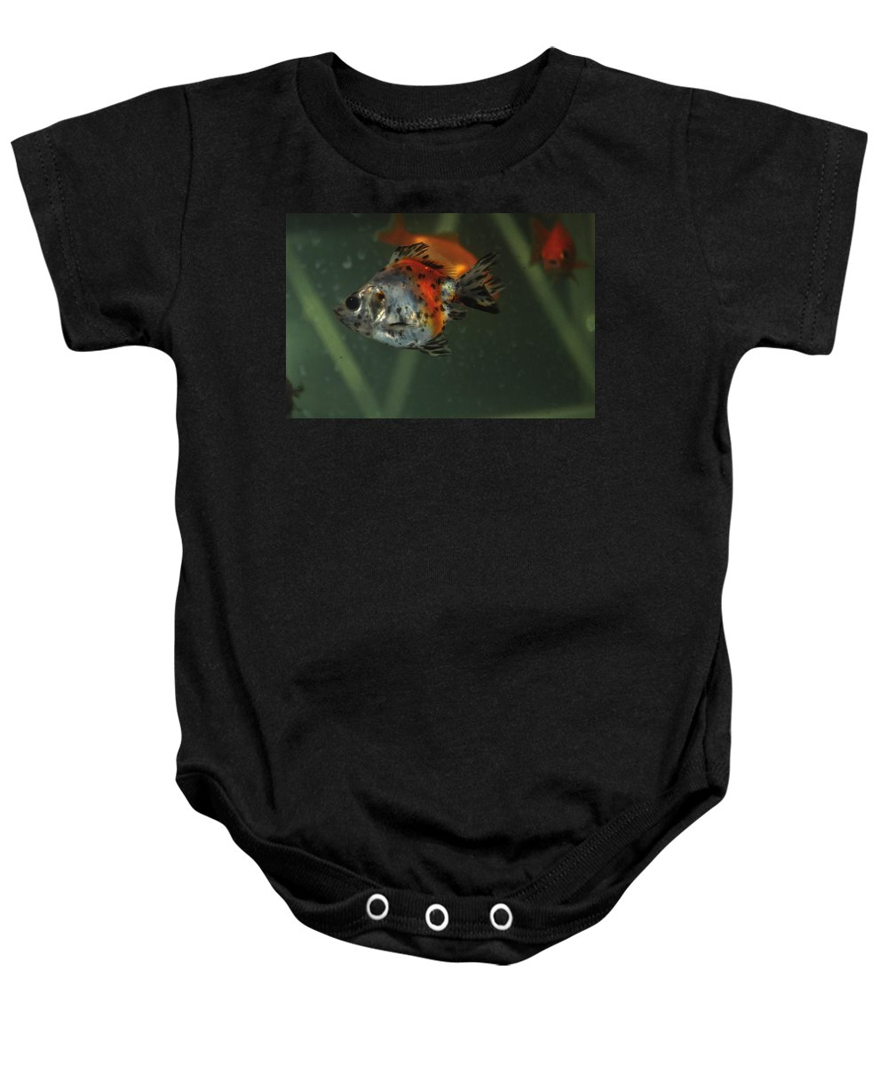 Fish Baby Onesie featuring the photograph Silver Goldfish by Catherine Conroy