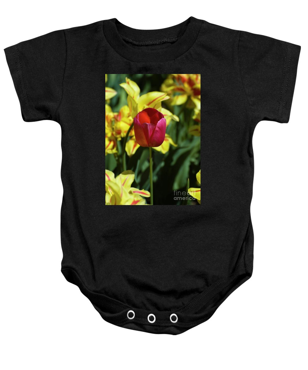 Red Tulip Baby Onesie featuring the photograph Single Red Tulip by Tim Mulina