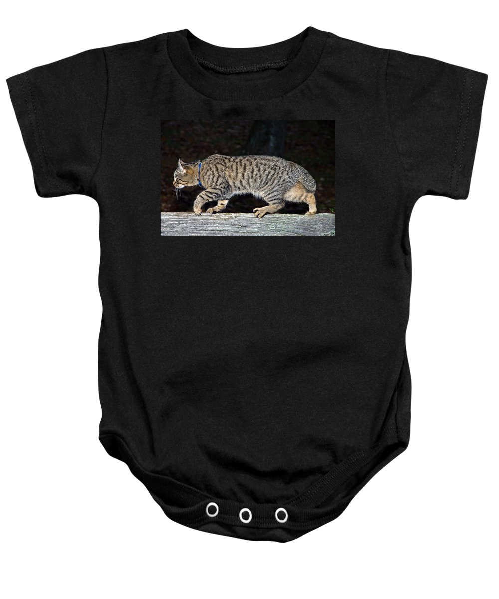 Cat Baby Onesie featuring the photograph Stalker by Susan Leggett