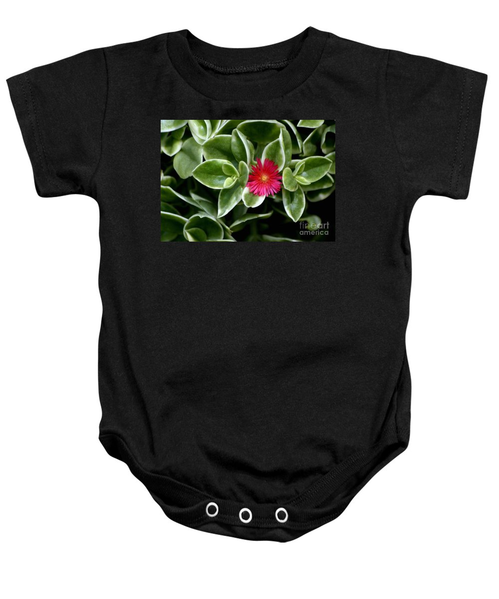 Succulent Baby Onesie featuring the photograph Stuck In The Middle With You by Living Color Photography Lorraine Lynch