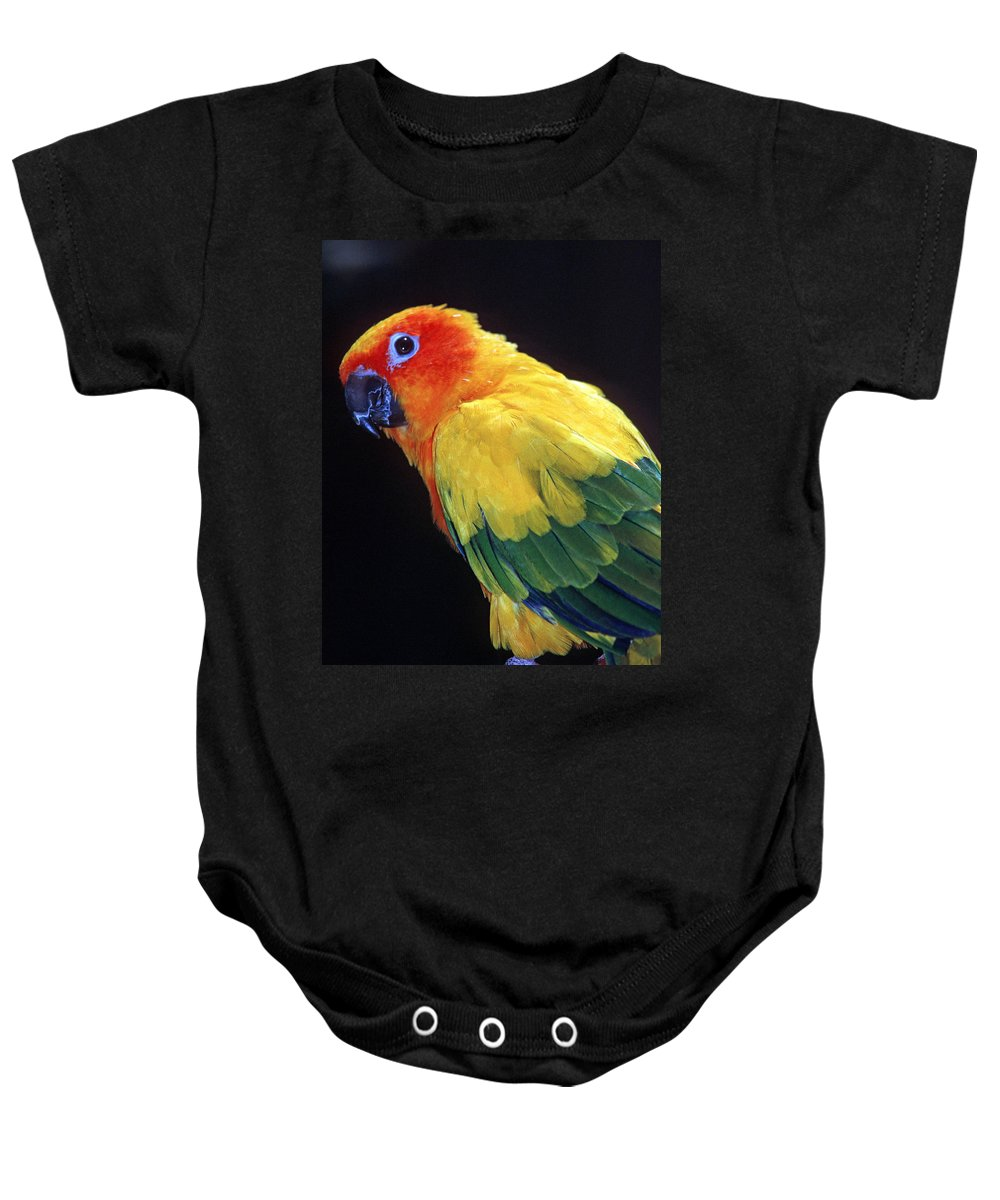 Sun Conure Baby Onesie featuring the photograph Sun Conure by Larry Allan