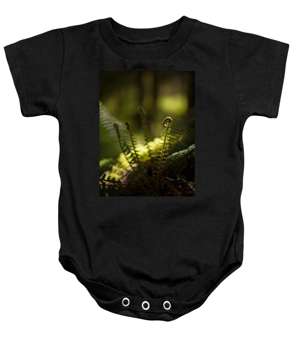 Olympic National Park Baby Onesie featuring the photograph Sunlit Fiddleheads by Mike Reid