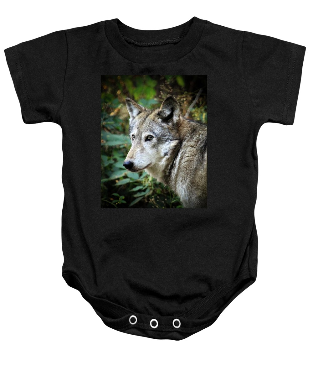 Wolf Baby Onesie featuring the photograph The Wolf by Steve McKinzie