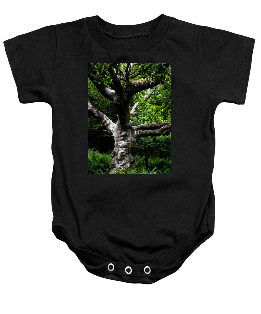 Colette Baby Onesie featuring the photograph Tree In Denmark by Colette V Hera Guggenheim