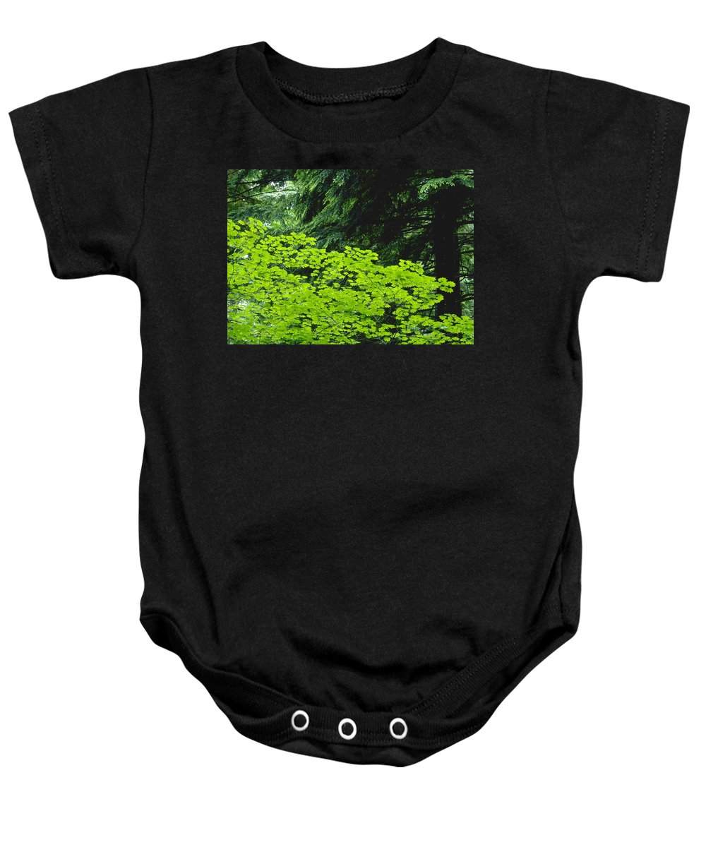 Country Baby Onesie featuring the photograph Umbrella Of Trees In Forest by Jim Weeks