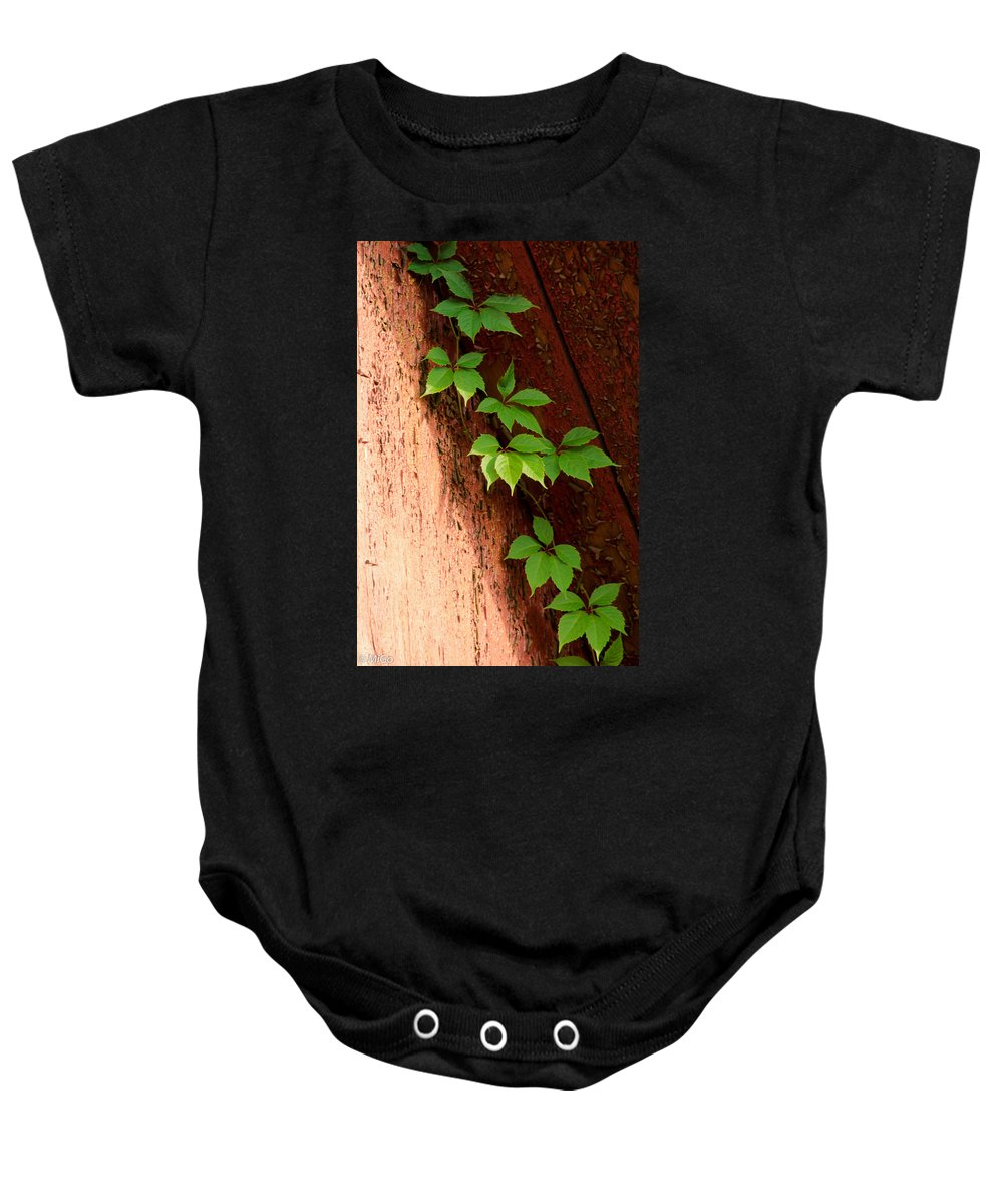 Vitis Baby Onesie featuring the photograph Vitis by Michael Goyberg